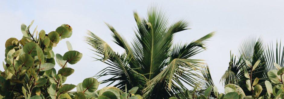 Resuming an Overgrown Landscape
